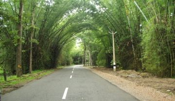 LUSCIOUS COORG