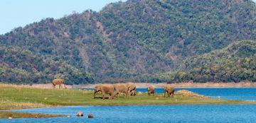 Thrilling Jim Corbett Tour Package From Ramnagar