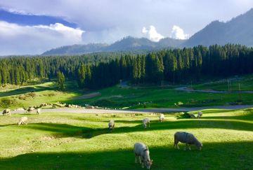 Kashmir Glimpse