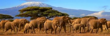 10 DAYS KENYA + TANZANIA WILDLIFE SAFARI-LAKE NAKURU,MASAI MARA,SERENGETI,NGORONGORO,TARANGIRE & AMBOSELI PARKS