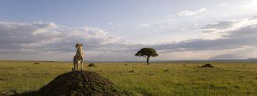 6 DAY GLANCE OF TANZANIA SAFARI-