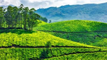 Nature's Bounty and Leisure in Kerala-Standard