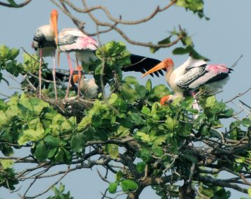 Wonders of Kerala with Houseboat Stay