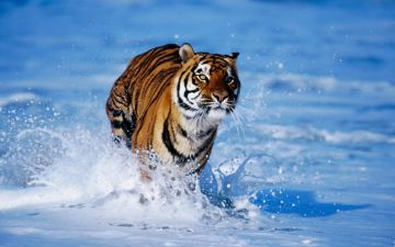 Big Five Wildlife Tour Package in India