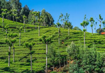 Ooty Tour Package From Indore