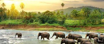 Sri Lanka - 4N/6D
