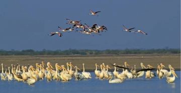 NE beautiful heritage  Assam + Meghalaya