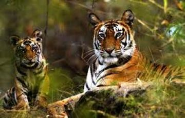 Jim Corbett, Nainital & Mussorie 5N/6Days Package