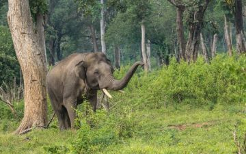 independence week package for Bangalore to Coorg for 04 Adults