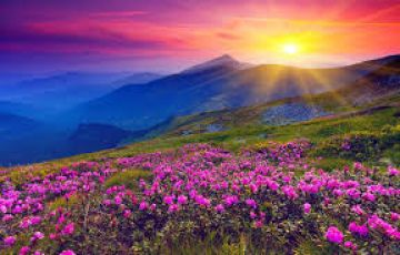 5 Days Valley Of Flowers Best Tour Package
