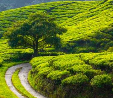 Amazing Wild Adventure Trip Of Bangalore For 2N/3D