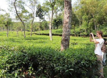 Bangladesh tea garden & lawachara rainforset
