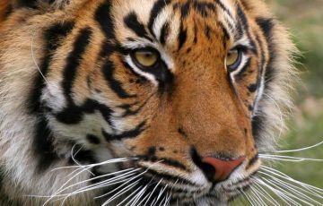 Bangladesh Sundarbans Trip