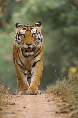 Bandhavgarh National park 2 night 3 Days Deluxe Package