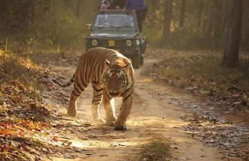Bandhavgarh 3 Night 4 Days Delux Package