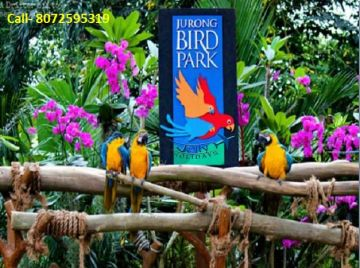 Relax at Singapore tour Rs,13000 From Chennai