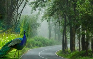 Kerala - Land Only