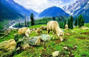 Explore Himachal with Amritsar