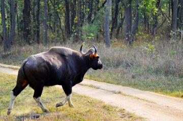 Jabalpur Bandhavgarh Budget Package