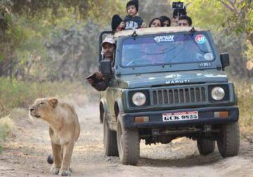 Gir National park Safari Tour