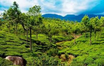 wayanad honeymoon Tour Package 28% off +918072595319