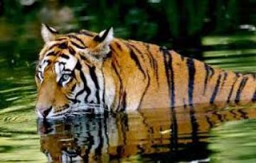 Bandhvgarh park & Jabalpur tour package