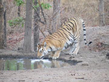 Tadoba Tiger Reserve Safari