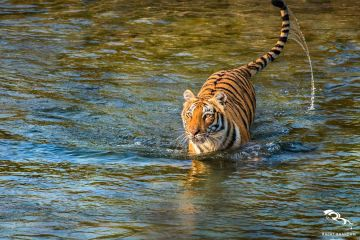 SPELLBINDING JIM CORBETT TOUR 2 NIGHTS 3 DAYS