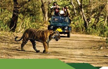 Madhai Wildlife Tour