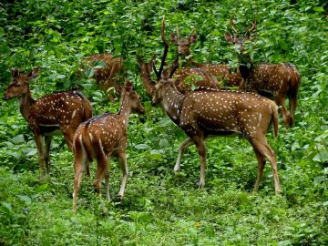 Hill Station Wild Life Sanctuary & Backwaters Of Kerala