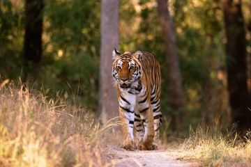 Kanha National Park | 2N & 3D