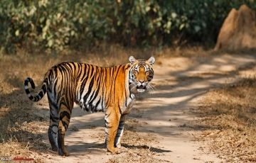 North India with Wildlife ( 10 Night - 11 Days)
