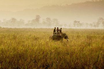 Kaziranga Wildlife Safari Tour