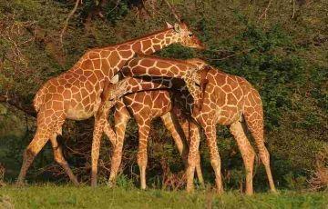 4 Nights Kenya June Special (4 star)