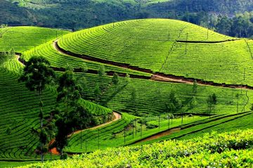 7N8D Mesmerizing South India