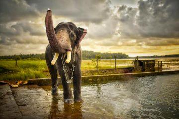 8 DAYS LUXURY South Kerala Holiday Package @ 35,500/ HONEYMO