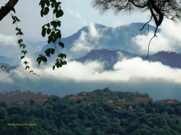 Himalayan Beauty