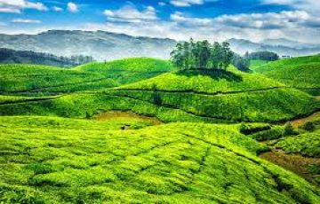 MUNNAR & THEKKADY TOUR PACKAGE 3 DAYS 2 PERSON