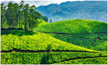 MUNNAR TOUR PACKAGE 4 DAYS 2 PERSON