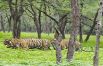 Ranthambore National Park Tour 02 Nights / 03 Days