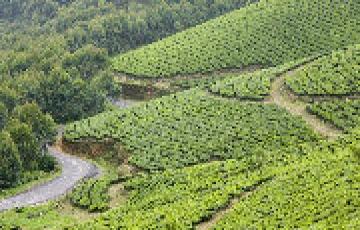 Honeymoon Kerala Tour covering -Cochin, Munnar ,Thekkadey, A