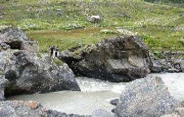 Speical Group himachal