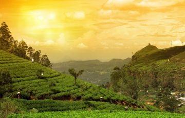 Kerala Tour Package Form Cochin