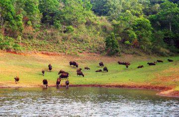 Glimpses of Kerala