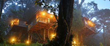 TreeHouse+Houseboat in Monsoon