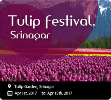Tulip Package with special offer