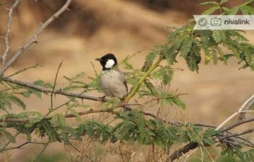 Gujarat Bird Watching